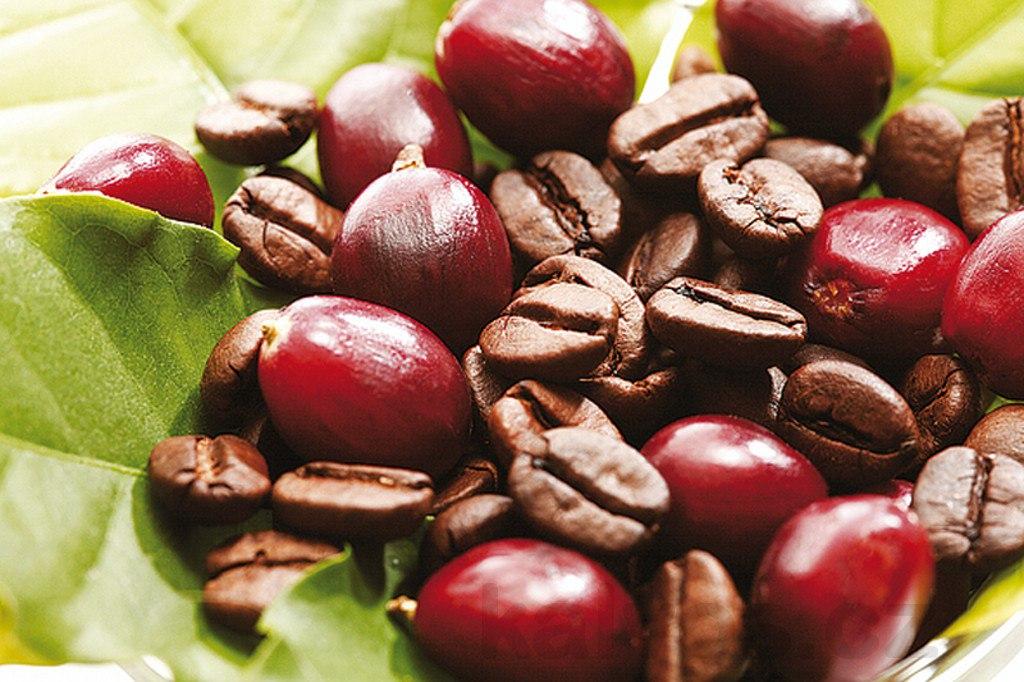 Кофе и кофейные ягоды